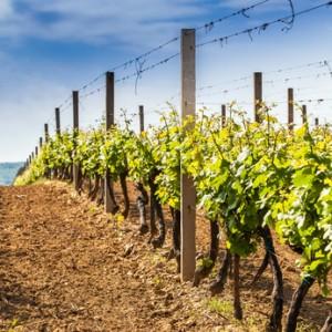 Wina północnej Chorwacji