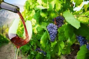 Wyjazdy winiarskie
