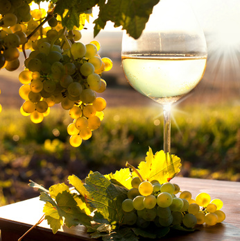 Święty Marcin patron wina
